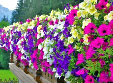 ۵ گل زیبای تابستانی
