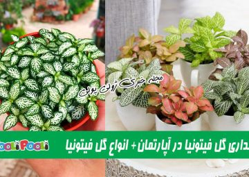 شرایط نگهداری گل فیتونیا یا پوست ماری+ نگهداری گل فیتونیا در شیشه