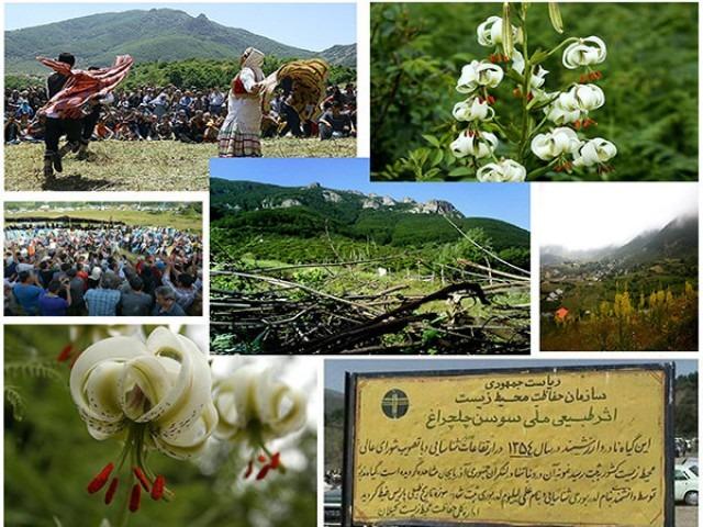 سوسن چلچراغ گلی کمیاب در روستای داماش