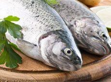 ۴ مورد از مشخصات ماهی تازه