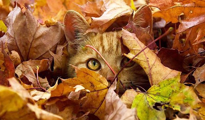 تصاویر زیبای پاییزی از نقاط مختلف جهان