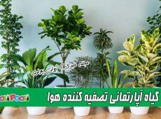 ۱۰ گیاه آپارتمانی تصفیه کننده هوا+ چه گیاهانی هوای خانه را تصفیه می کنند؟