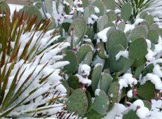 ۵ نکته مهم برای نگهداری از کاکتوس ها در زمستان