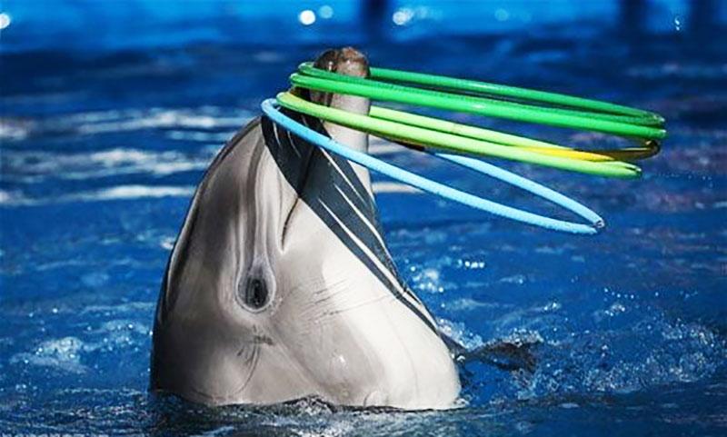 پارک دلفین ها یکی از جاذبه های گردشگری جزیره کیش