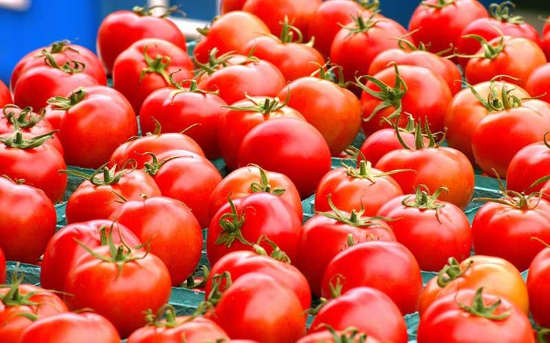 قیمت گوجه فرنگی گران شد