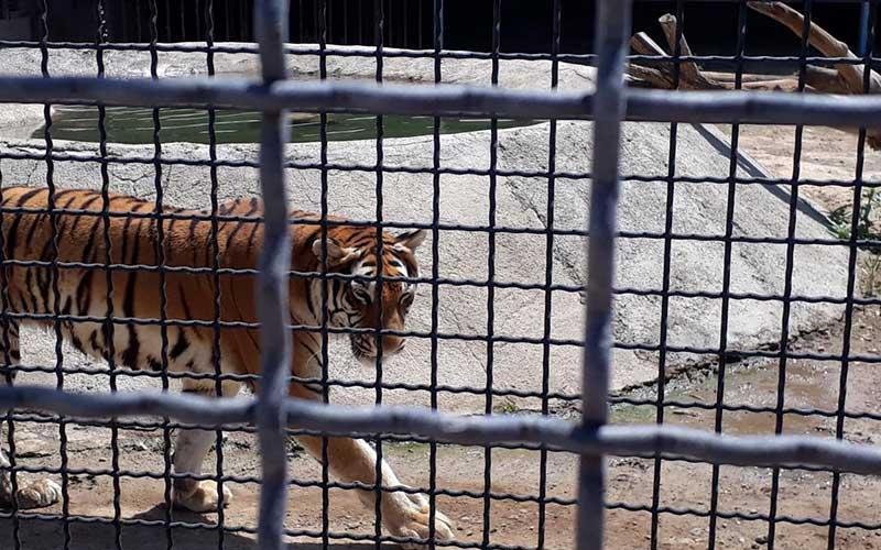 آشنایی با باغ وحش صفادشت در استان تهران