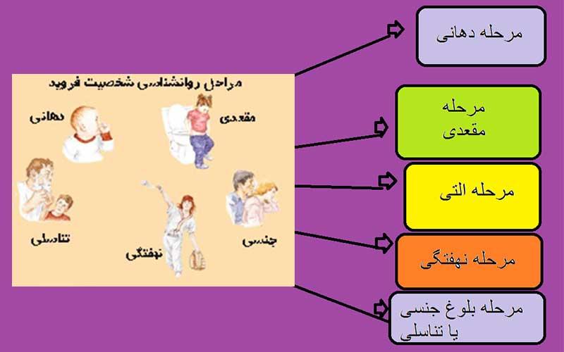 نظریه شخصیت و مراحل رشد روانی- جنسی فروید
