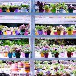 نمایشگاه گل و گیاه کرج