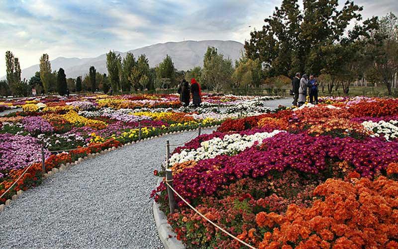 جشنواره داودی در باغ گیاه شناسی ملی ایران