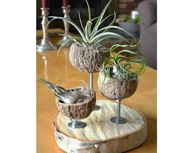 تزیین گیاهان هوازی