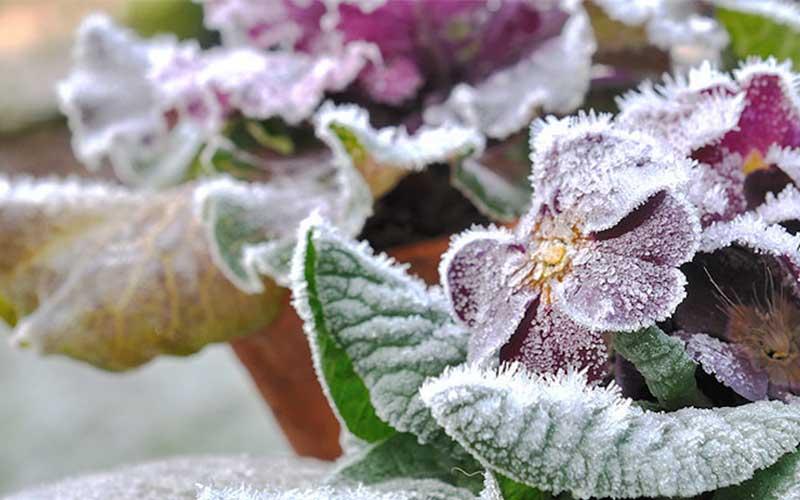 چگونه از گیاهان در زمستان محافظت کنیم؟
