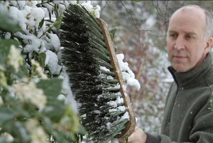 تکاندن برف درختان در برف