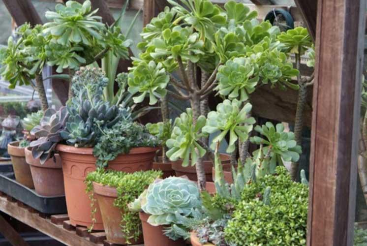 انتقال گیاهان در هوای سرد به داخل منزل