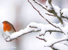 کپشن اینستاگرام برای برف و زمستان