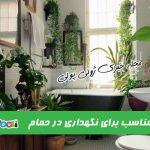 گیاهان مناسب برای نگهداری در حمام