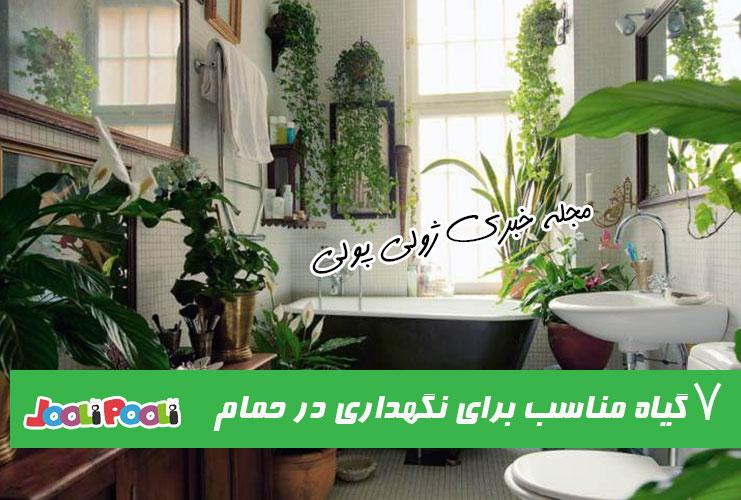 ۷ گیاه آپارتمانی مناسب برای نگهداری در حمام