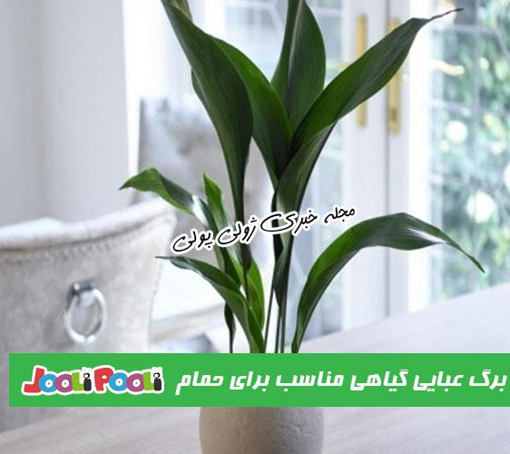 گیاه برگ عبایی مناسب برای نگهداری در حمام