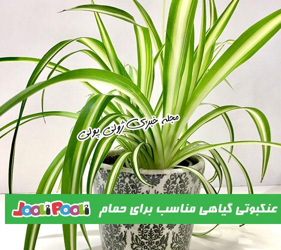 گیاه آپارتمانی گندمی مناسب برای حمام
