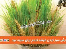 آموزش سبزه خوشه گندم برای عید نوروز