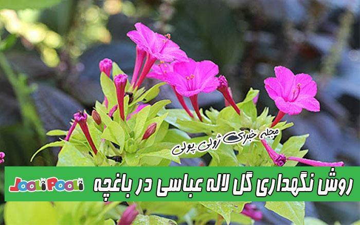 نگهداری گل لاله عباسی