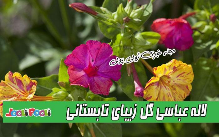 لاله عباسی گل زیبای تابستانی
