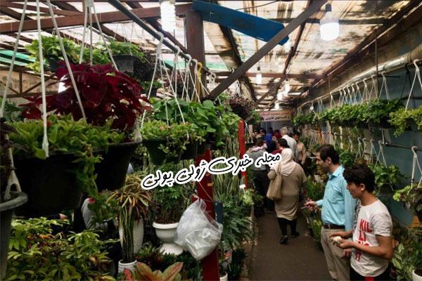 فروش گیاهان آپارتمانی در بازار گل غرب تهران
