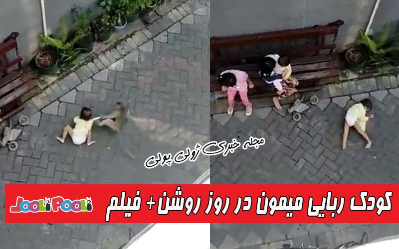 ویدئوی کودک ربایی میمون در روز روشن!+ فیلم دزدیده شدن کودک توسط میمون
