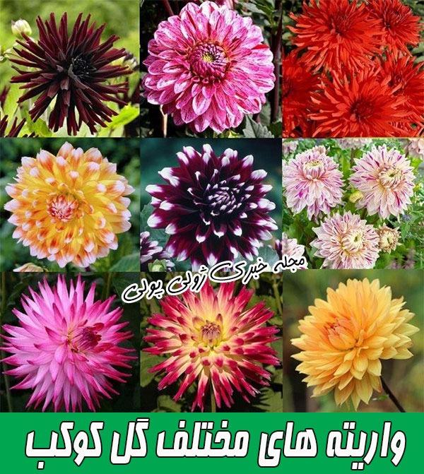 گونه های مختلف گل کوکب