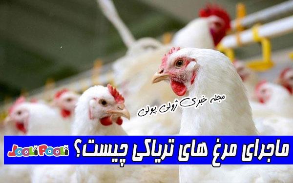 ماجرای مرغ های تریاکی چیست؟