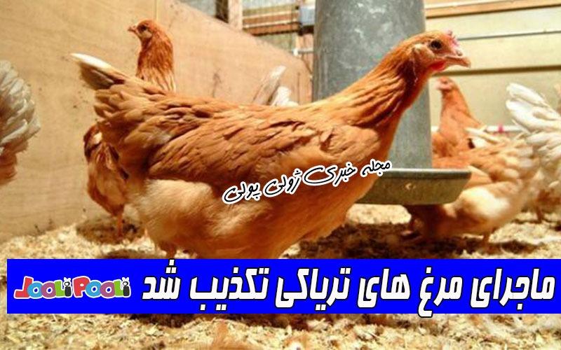 ماجرای مرغ های تریاکی چیست؟+ ماجرای مرغ های تریاکی تکذیب شد