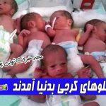 شش قلوهای کرجی بدنیا آمدند