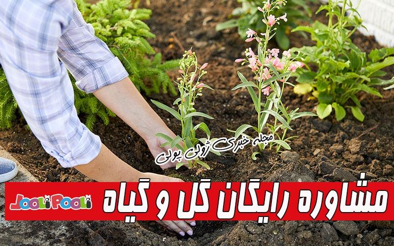 مشاوره آنلاین گل و گیاه