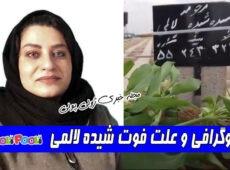 بیوگرافی شیده لالمی روزنامه نگار و علت فوت+ شیده لالمی کیست؟