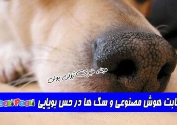 رقابت هوش مصنوعی و سگ ها در حس بویایی